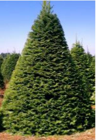 Hemet High's Christmas Tree, Wreath, Evergreen Swag and Garland Fundraiser