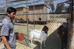 The Westminster High agriculture science teacher proudly shows off one of the farm's goats.