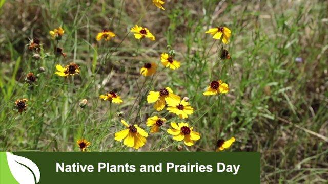 Native Plants & Prairies Day