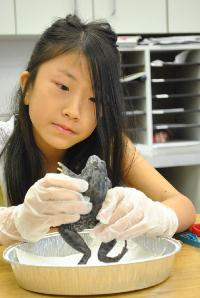 Third/ Fourth Graders Experience Hands-On Science: Frog Observation and Dissection