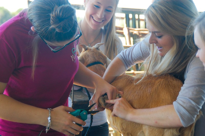 SHS Graduate Leads Vet Tech Program Thumbnail Image