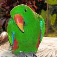 Gloria Ilagan's Profile Photo