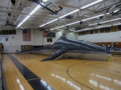 Whale Day!!!  is April 2nd
