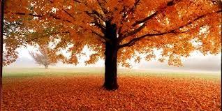 October Events 10/26 - 10/30