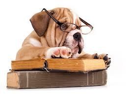 a bulldog reading a book